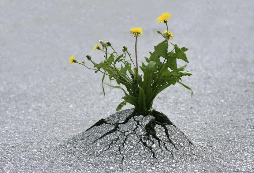 7 claves de Resiliencia: el coraje para volveratrás