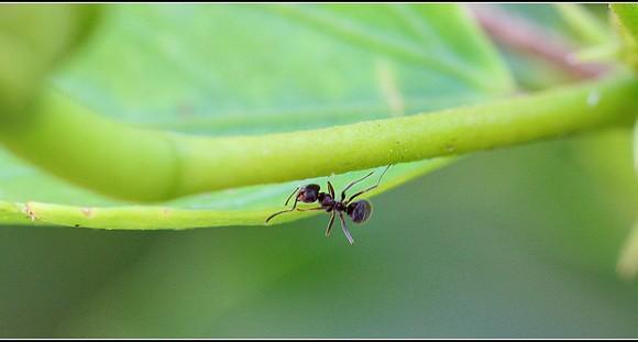 El momento de las pymes hormigas
