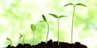 crezca-creciendo-planta-56647873