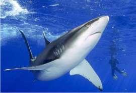 Pon un Tiburón en tu VIDA: Desafíate, Busca el ÉXITO de un Modo Diferente