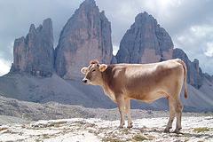 Es el momento de sacrificar las vacas sagradas