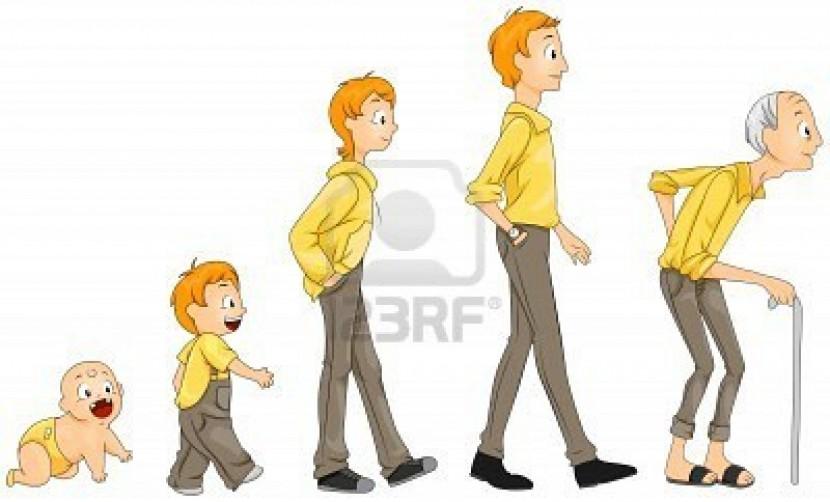 La propiedad en la empresa familiar: etapas y transiciones