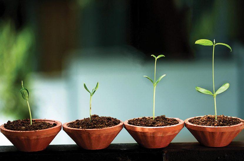 Crecer requiere de sueños y planificación