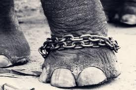 El Elefante Encadenado: una enseñanza de Jorge Bucay para la vida y el emprendimiento