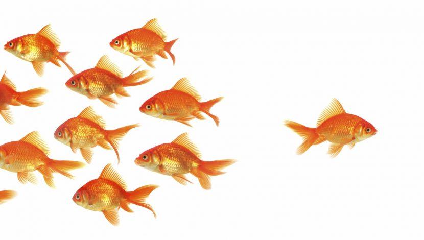 Si naciste diferente, ¿Por qué empeñarte en parecerte al resto?