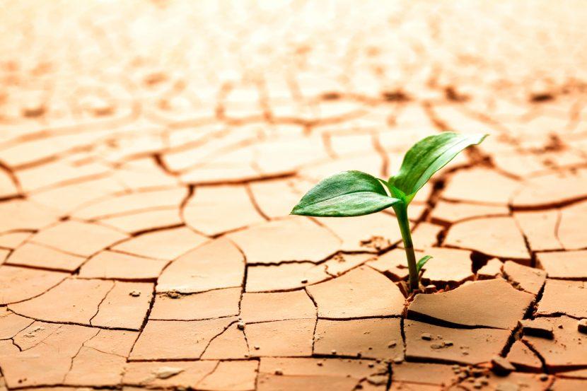 Resiliencia: 10 cosas que deberías saber