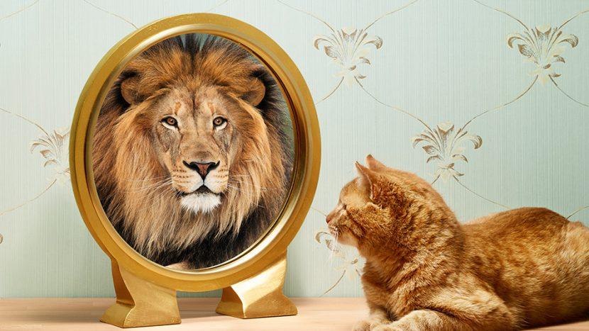 Todo cambio empieza cuando mejoras el concepto de ti mismo