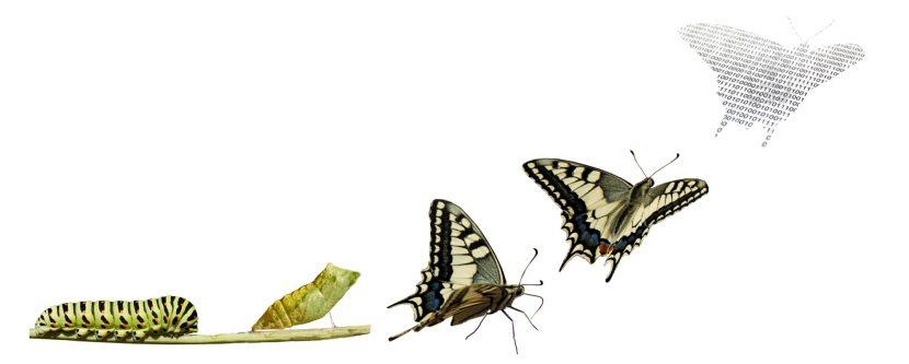 Transformación: ¿Por qué es tan difícil?