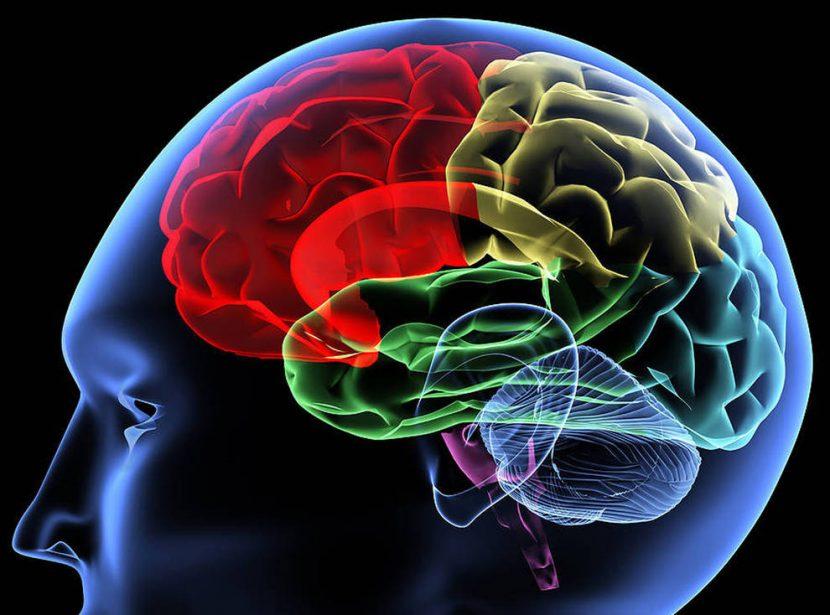 El cerebro emocional que nos engaña y bloquea la innovación