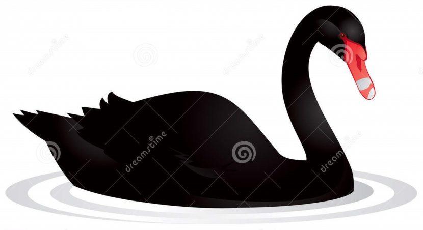 Cuídate de los cisnes negros: la propuesta de Nassim Taleb para la Nueva Era