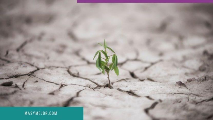 Claves esenciales para ser resiliente en tiempos de crisis