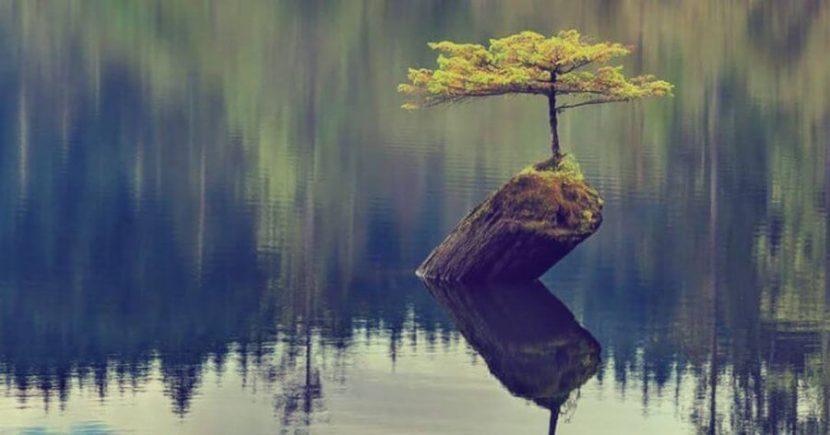 Resilencia: las 7 claves para salir fortalecidos de la adversidad