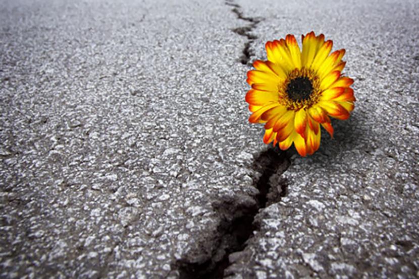 15 pasos para reinventarte después de perderlo todo