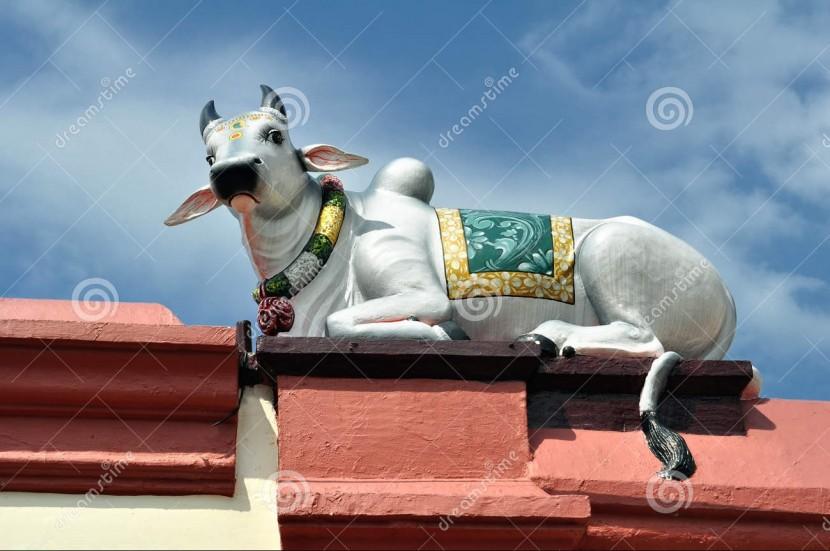 Las vacas sagradas en la empresa: Qué son y cómo la cultura puede con ellas