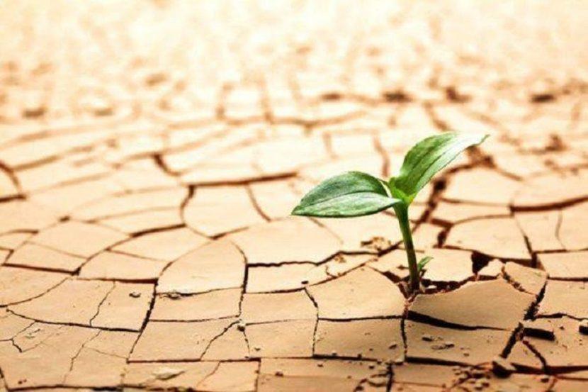 Resiliencia y empatía en tiempos de crisis
