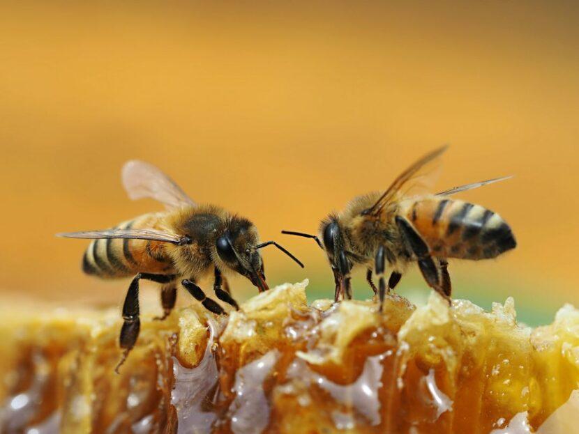 Lecciones de emprendimiento que podemos aprender de las abejas