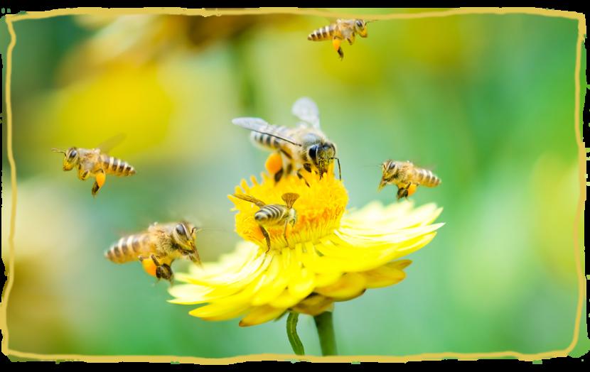 Las abejas y el trabajo en equipo, ¿Podemos aprender de ellas?