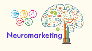 Principios de neuroventas que deberías aplicar en tu estrategia comercial