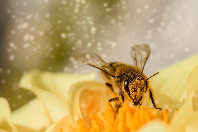 La motivación de la abeja, la lealtad del caballo y el vuelo del pato